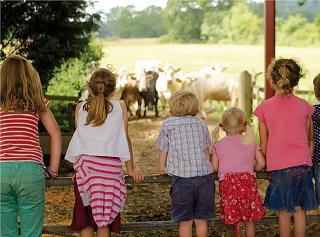Ден на отворените врати в Долни Дъбник: На гости в биологичната овцеферма