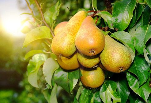 8 756 овощари в страната са получили субсидии по Схемите за плодове
