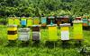 От 12 ноември започва прием по мерките от Националната програма по пчеларство