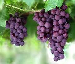 Националната програма за подпомагане на лозаро-винарския сектор бележи най-успешната си година