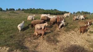 Животновъдите получиха над 4,3 млн. лева обвързано подпомагане