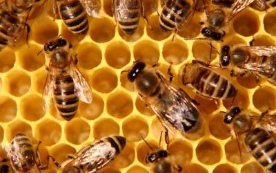Близо 5 млн.лв. ще получат пчеларите по de minimis
