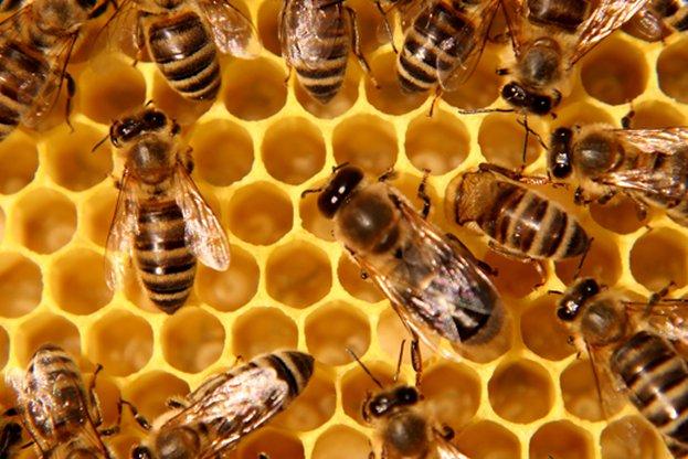 Министър Порожанов одобри националната програма по пчеларство за тригодишния период 2020-2022 г.