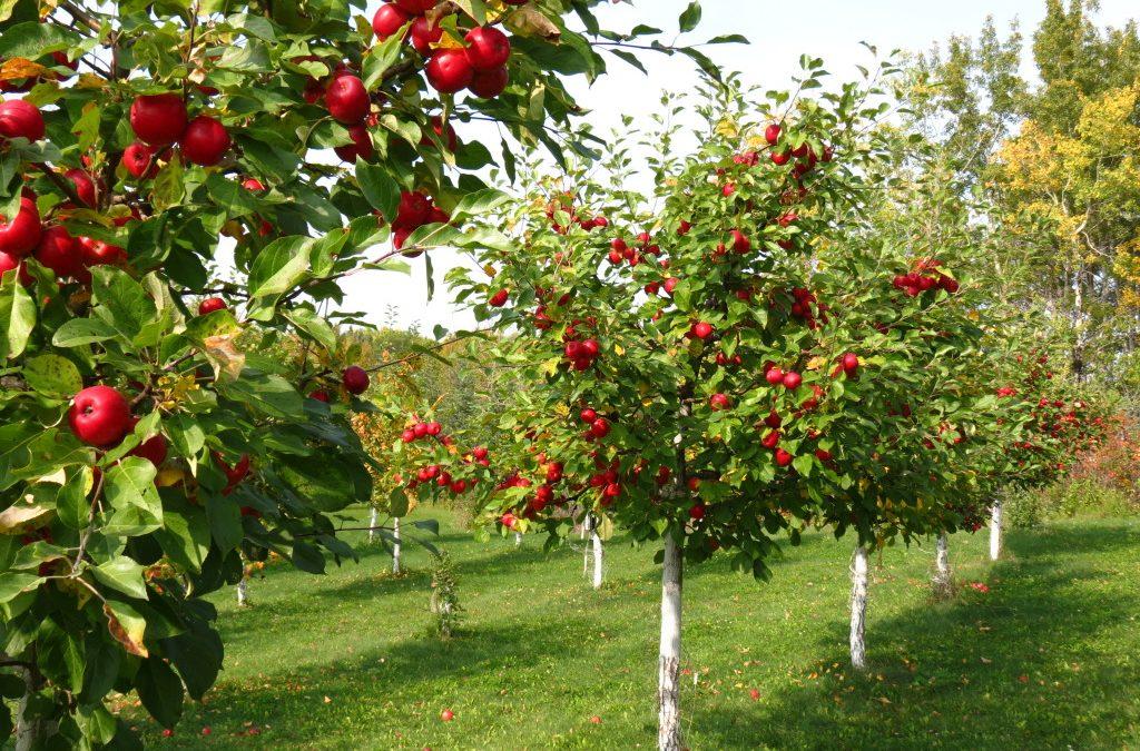 2/3 от европейските овощни градини са съсредоточени в Испания, Италия и Полша