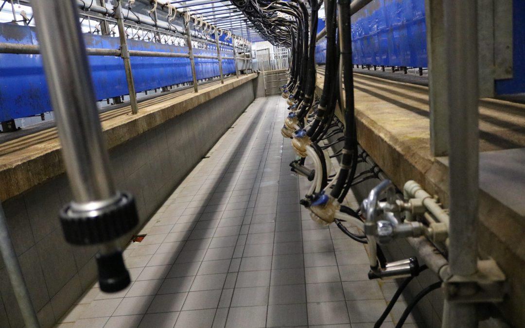 Отпускат субсидия до 25 000 лева за покупка на доилна инсталация