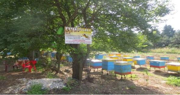 Вдъхновяваща история за млада биопчеларка от с. Горно Абланово, Русенско