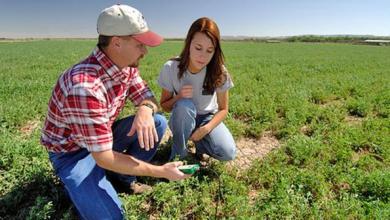 ДФЗ финансира инвестициите на 880 млади фермери