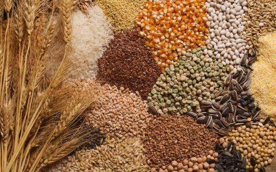 Секторът на зърнените култури в ЕС: Основни характеристики, предизвикателства и перспективи