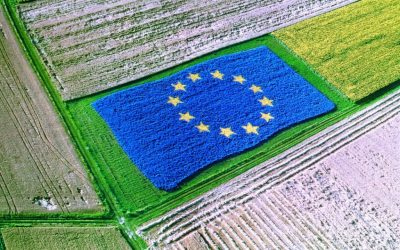 Комитетът по земеделие на ЕС решава за преходния период за прилагане на ОСП през 2021 г.