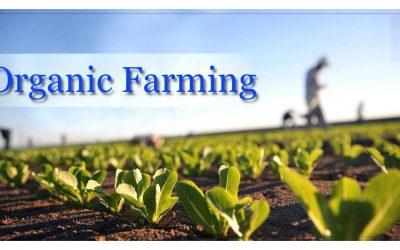 Органичното производство може да бъде решение за постигане на целите за устойчиво развитие