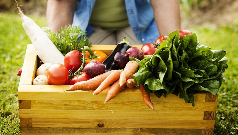 Аграрно-хранителната политика трябва да се съсредоточи върху устойчивостта, тъй като е изправена пред предизвикателството да изхрани нарастващото световно население през следващите десетилетия