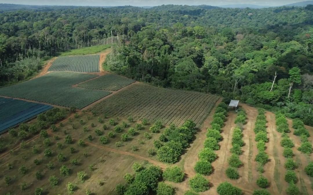 Устойчиво земеделие във Френска Гвиана