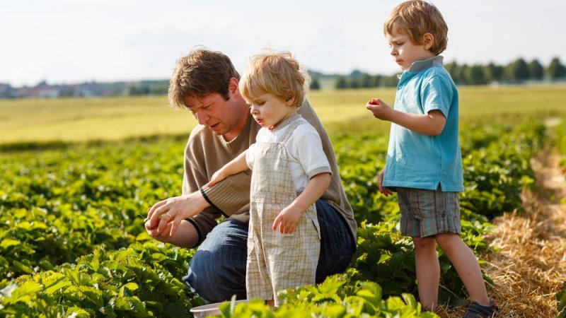 Моделът на семейното земеделие в ЕС е изложен на риск от изчезване, предупреждава евродепутат